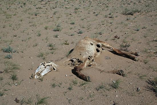 wüste gobi wo